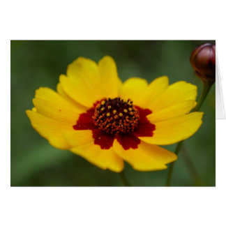 summer flowers - coreopsis card