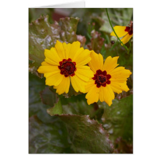summer flowers - coreopsis couple card