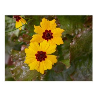 summer flowers - coreopsis couple postcard