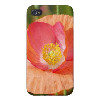 Summer flowers iPhone 4 Speck Case iPhone 4/4S Cover