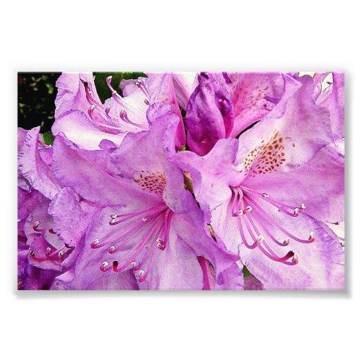 Summer Flowers Photo Print