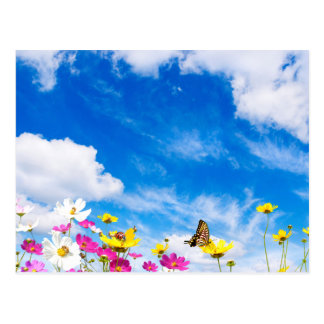 Summer flowers & sky postcard
