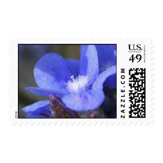 Summer Forget-Me-Not flower Postage