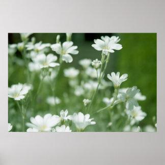 summer fresh white garden flowers print