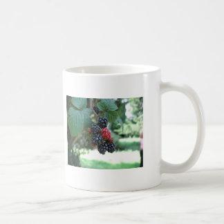 Summer Fruits (4803) Classic White Mug 11oz