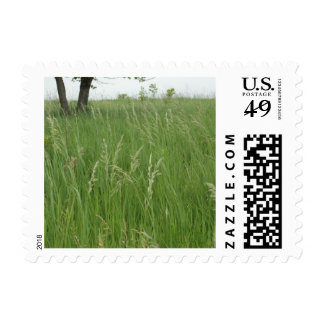 Summer Grass postage by H.A.S. Arts
