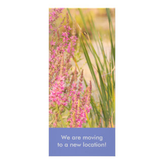 Summer Grasses and Flowers Rack Card