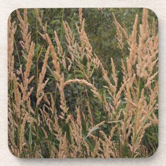 Summer Grasses Coaster
