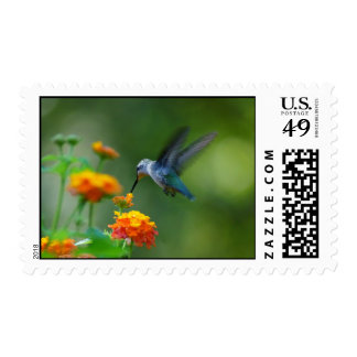 Summer Humming Stamp