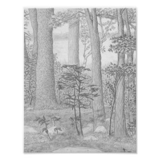 Summer Lake with Woods Graphite Pencil Drawing Poster