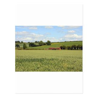 summer landscape postcard