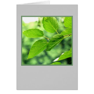 'Summer Leaves with Raindrops'  Blank Note Card