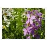 Summer Lilac and Daisies Colorful Wildflowers Poster