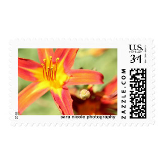 Summer Lilly Flower Photography Stamp