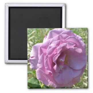 Summer Love Rose Magnet