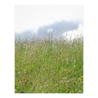Summer meadow panorama letterhead
