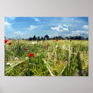 Summer Meadowsr ed poppies wild flowers Garden of Poster