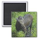 summer moose fridge magnet