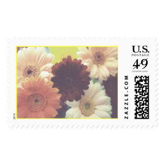 Summer Morning Daisy Stamp (Blank)