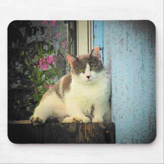 Summer nap mouse pad