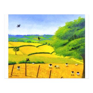 Summer of Sheep Postcard