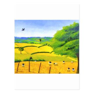 Summer of Sheep Postcards