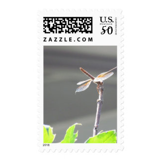 Summer Of The Dragonfly ~ Ready For Take Off Postage