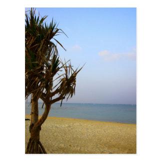 Summer Okinawa Postcard