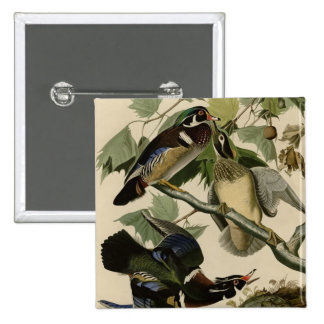 Summer or Wood Duck 2 Inch Square Button