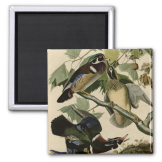 Summer or Wood Duck 2 Inch Square Magnet