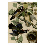 Summer or Wood Duck Greeting Card