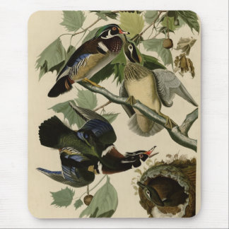 Summer or Wood Duck Mouse Pad