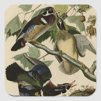 Summer or Wood Duck Square Sticker