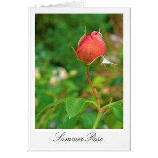 Summer Peach Rose Bud Card