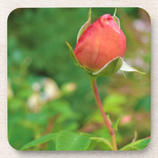 Summer Peach Rose Bud Drink Coaster