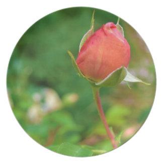 Summer Peach Rose Bud Plate
