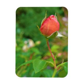 Summer Peach Rose Bud Rectangular Photo Magnet