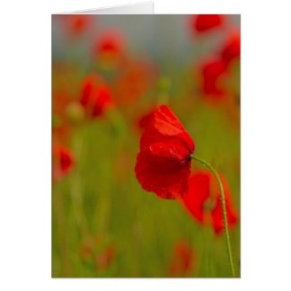 Summer Poppies Card