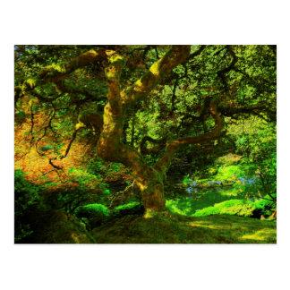Summer, Portland Japanese Garden, Portland Postcard