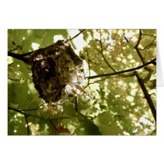 Summer Quarters - Vireo Nest Greeting Card