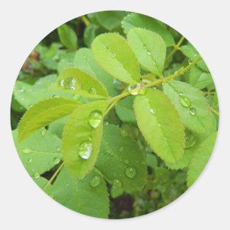 Summer Rain on Plants Classic Round Sticker