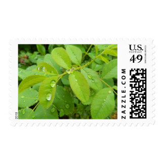Summer Rain on Plants Postage