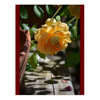 Summer Rose Garden Postcard