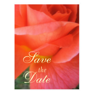 Summer Rose Wedding Postcard