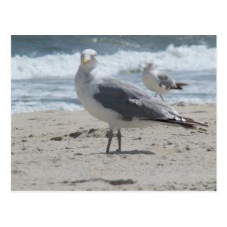 Summer Sea Gull Post Cards