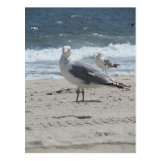 Summer Sea Gull Postcard