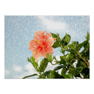 Summer Showers Hibiscus Flower Poster