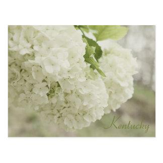 Summer Snow by JerseyFawn Postcard