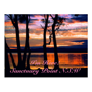 Summer Solace Postcard