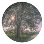 Summer sunbeams breaking through tree branches plates